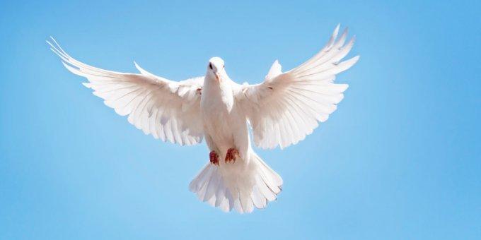 Novembre 2019 - Prions pour la paix