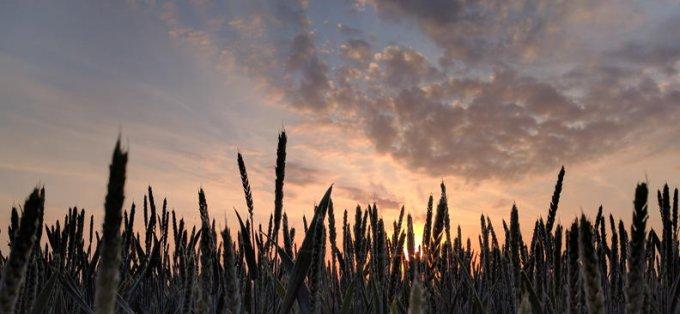 """""""Pour entrer dans le royaume des Cieux, il faut faire la ..."""" (Mt 7, 21. 24-27)"""