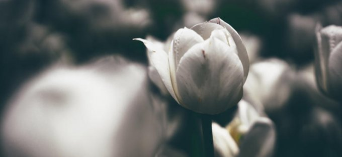 """""""Je suis la résurrection et la vie"""" (Jn 11, 3-7.17.20-27.33b-45)"""