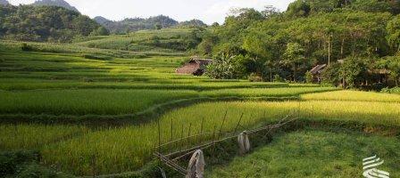 Prions pour les Chrétiens du Vietnam, persécutés.
