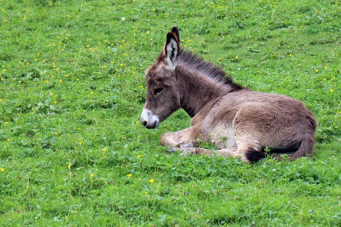 Abba Antoine: la vision de l'âne