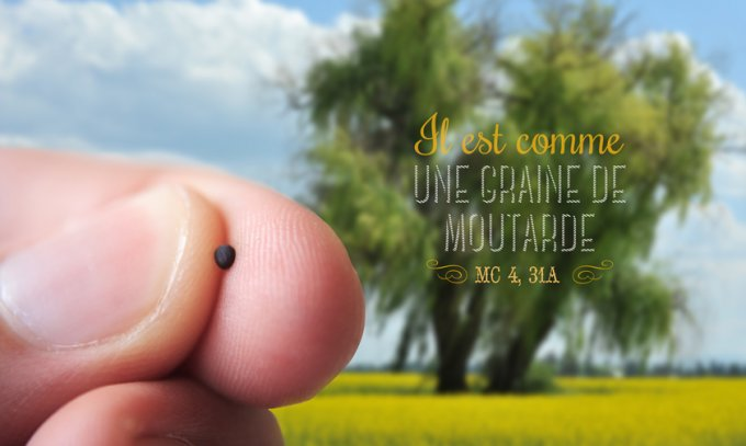 """""""Il est comme une graine de moutarde"""""""