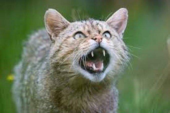 Un terrible chat barrait le chemin. Un appel du nom de Jésus dispersa tout.