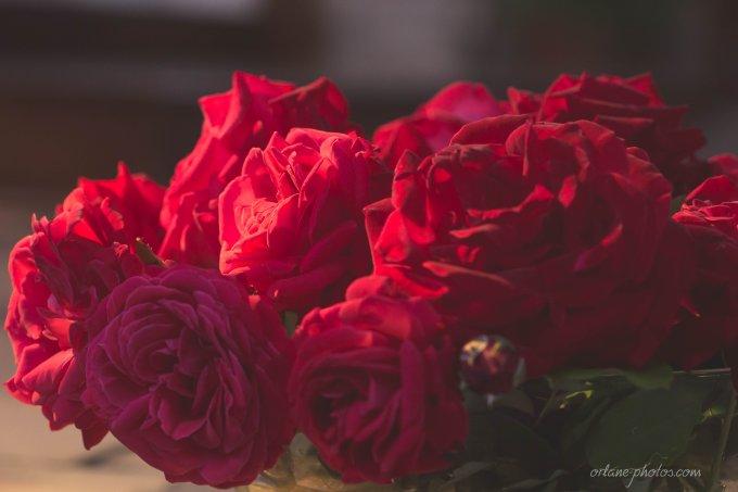 Jour 6 : La sainte aux roses