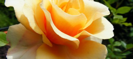 Prions Guérisons des blessures familiales