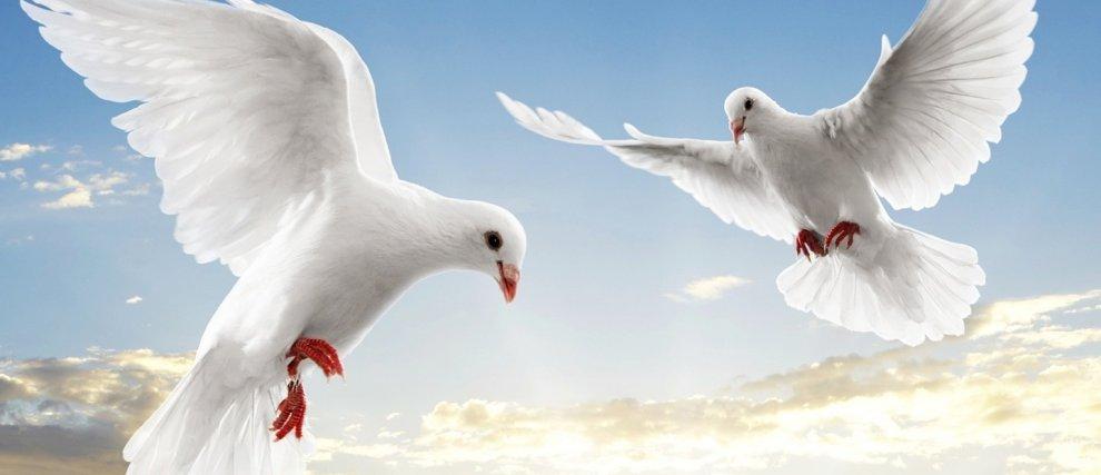 Prions pour la Paix dans le monde