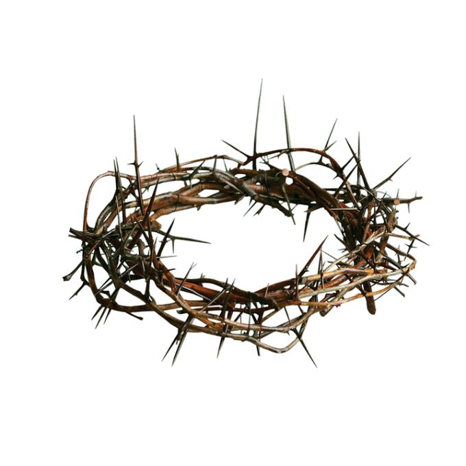 Jésus est… le cep, nous sommes les sarments (jour 39)