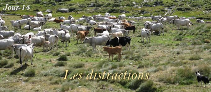 Jour 14 - Les distractions