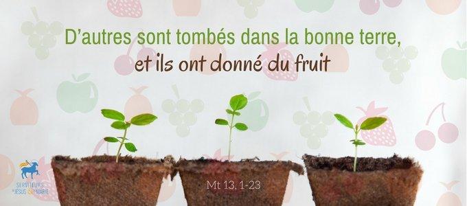 Homélie du 15e dimanche du Temps Ordinaire - Père Eric, sjm.