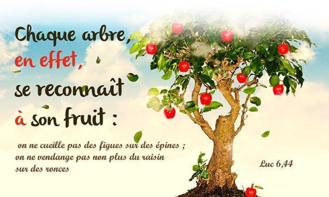 Chaque arbre, en effet, se reconnaît à son fruit