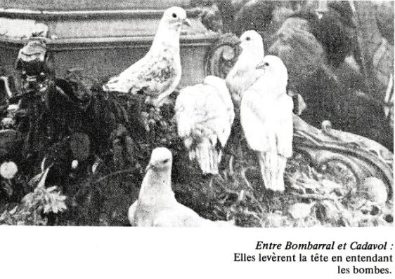 79132-les-colombes-de-la-vierge-1-3