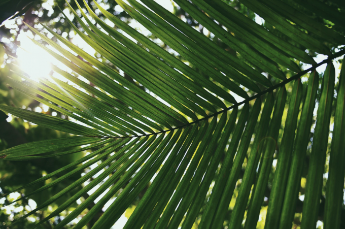 Palm Sunday : How will you journey alongside Jesus this week?