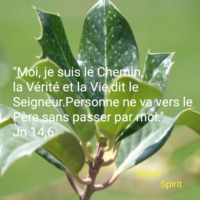 """""""Moi, je suis le Chemin, la Vérité et la Vie"""" Jn 14,6"""