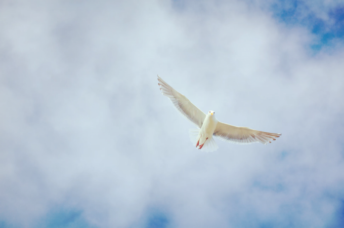 Day 3: Novena to the Holy Spirit
