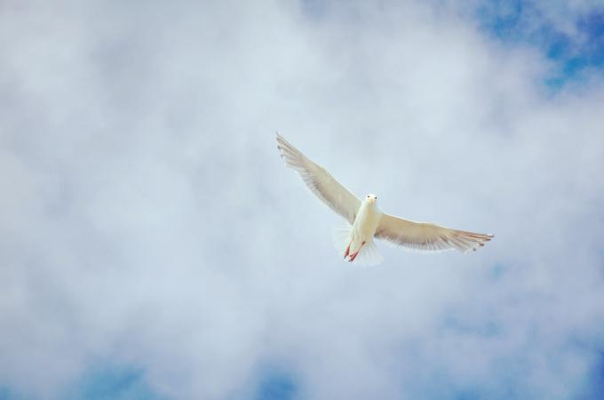 Day 9: Novena to the Holy Spirit