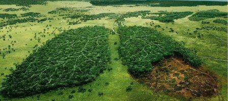 ¡Oremos por la creación! #PrayForAmazonia